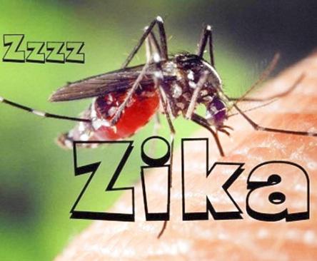 Tiêu diệt Zika bằng muỗi mang vi khuẩn Wolbachia